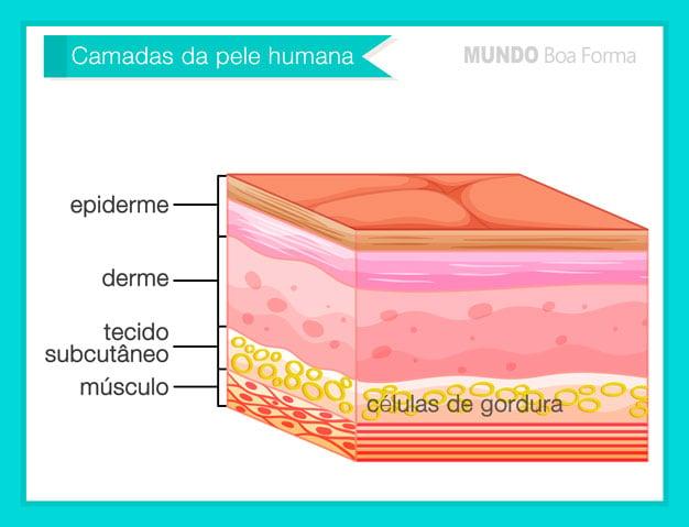 camadas da pele - derme epiderme gordura e celulite