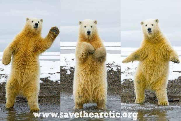 Dança do Urso