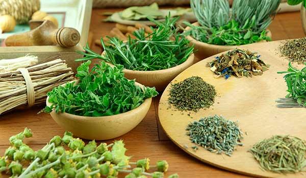 ervas medicinais para emagrecer