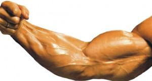 Bíceps com veias