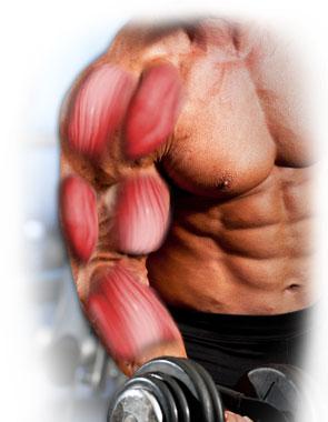 como o musculo cresce
