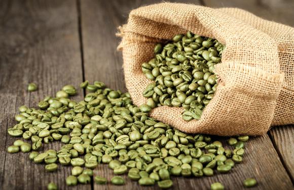 green coffee colheita