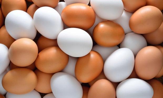 9bboaforma - ovos