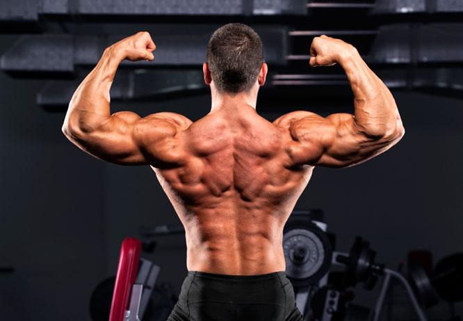Músculos das costas
