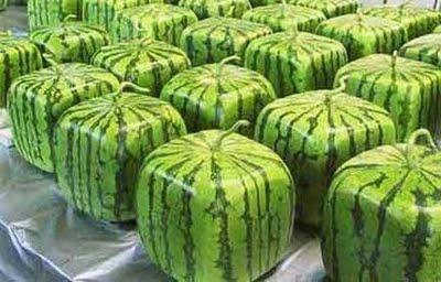 melancia-quadrada-japonesa