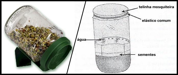 pote germinador de sementes