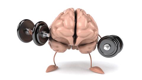 10iboaforma - cerebro