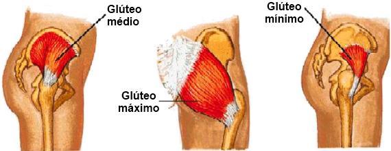 Anatomia-glúteos