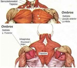 anatomia-deltoides-ombros-300x265