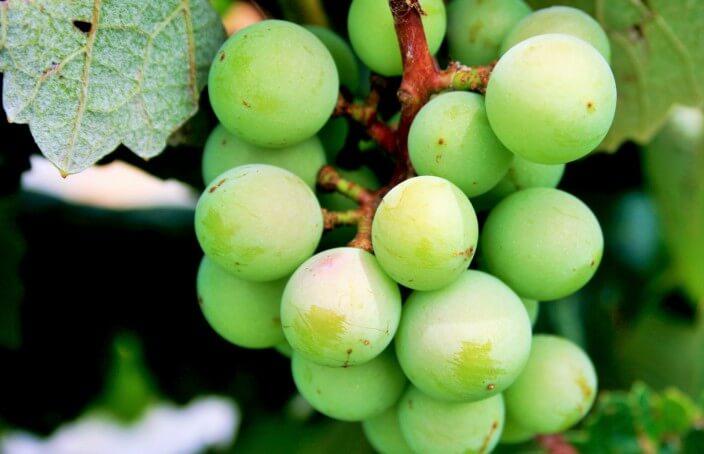 green-grapes-704x454