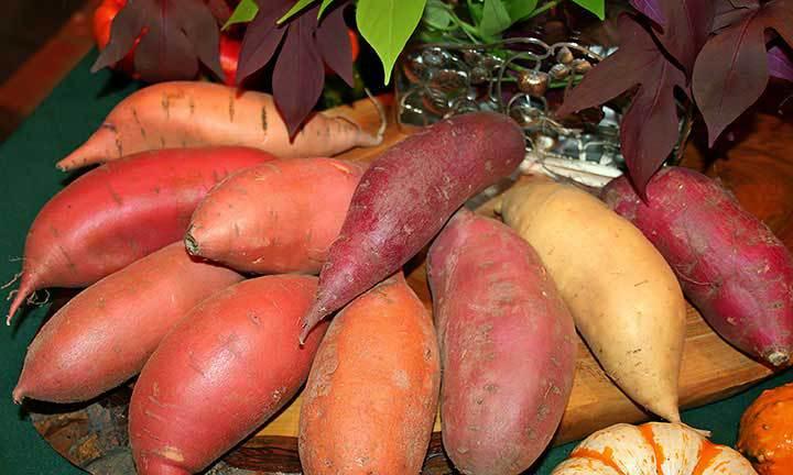 35-sweet-potatoes