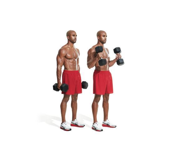 13 Melhores Exercicios Para Bracos Casa E Academia