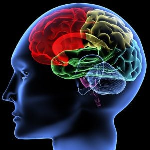 cerebro e resveratrol