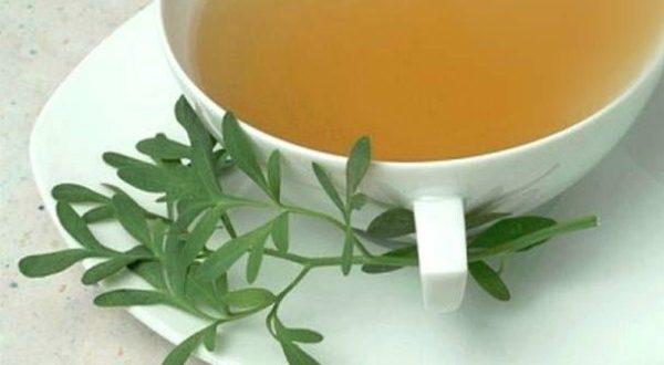 Resultado de imagem para chá de arruda
