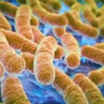 Emoções Humanas São Afetadas Pelas Bactérias do Intestino, Segundo Estudo