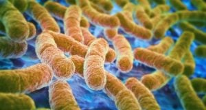 Bactérias do intestino