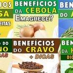 [Videos] Salsa, Cebola, Alecrim, Orégano, Cravo e Hortelã