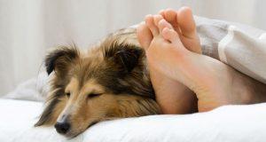 Dormir com o cachorro
