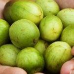 6 Benefícios do Suco de Umbu - Como Fazer, Receitas e Dicas
