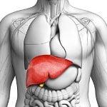 Qual é a Função do Fígado e Por Que Ele é Tão Importante?