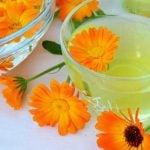 Calêndula - O Que é, Para Que Serve, Chá e Propriedades