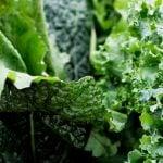 A Controvérsia do Ácido Oxálico nos Alimentos