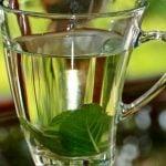 Chá de Guaçatonga Emagrece? Para Que Serve, Benefícios e Indicações