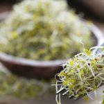 5 Receitas de Broto de Brócolis - Benefícios e Como Fazer