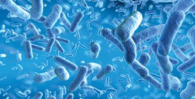 Bifidobacterium