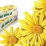 9 Benefícios da Arnica - Para Que Serve e Cuidados