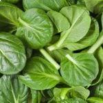 4 Coisas que Você Pode Comer à Vontade sem Ganhar Peso