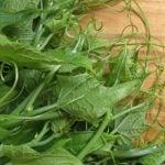 6 Receitas de Broto de Abóbora - Benefícios e Como Fazer