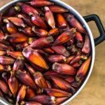 9 Benefícios do Pinhão - Para Que Serve e Propriedades