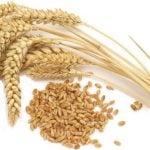 Alergia ao Trigo - Sintomas, Alimentos e O Que Pode Comer