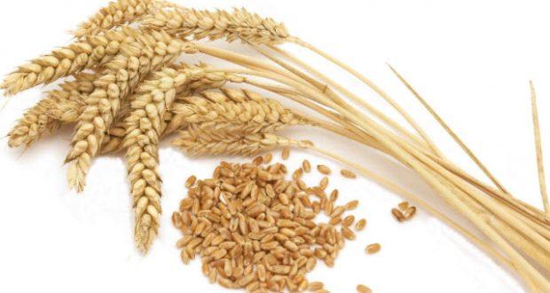 alergia ao trigo sintomas alimentos e o que pode comer