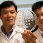 """Cientistas Formulam Simples """"Adesivo"""" Que Transforma Gordura da Barriga em Energia"""