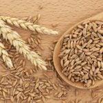 9 Benefícios da Espelta - O Que é, Propriedades e Receitas