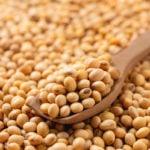 grãos de soja