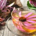 11 Benefícios do Chá de Equinacea - Para Que Serve e Como Fazer
