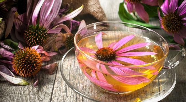 11 Benefícios do Chá de Equinacea - Para Que Serve e Como Fazer -  MundoBoaForma