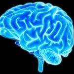 Excesso de Gordura na Barriga Pode Fazer seu Cérebro Encolher, Diz Estudo