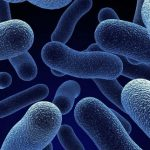 Flora Bacteriana Aumentada - O Que Significa?