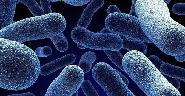 Flora bacteriana aumentada