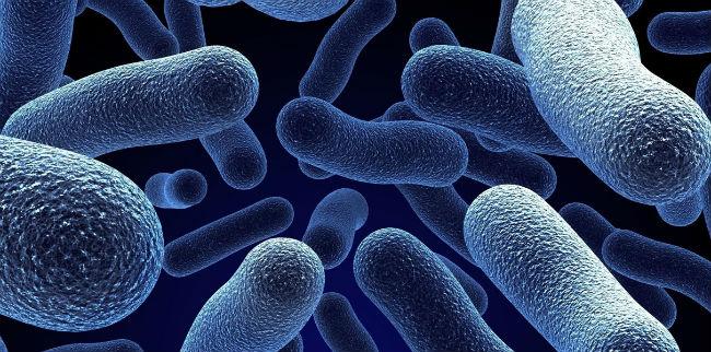 Flora bacteriana
