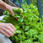 Como Fazer uma Horta em Casa - 8 Passos e Cuidados
