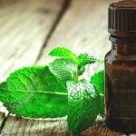 15 Benefícios do Óleo de Hortelã - Para Que Serve e Como Usar