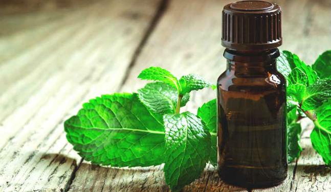 oleo essencial peppermint beneficios