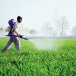 9 Doenças Causadas por Agrotóxicos nos Alimentos