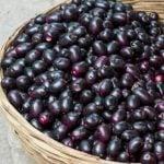 Fruta jamelão - Para que serve, benefícios e como usar