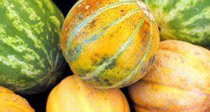 Tipos de melão